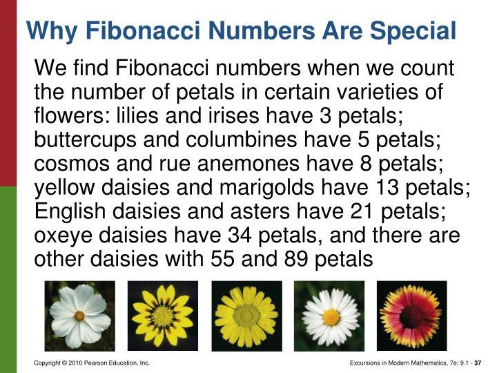 We find Fibonacci numbers when we count the number of petals in certain varieties