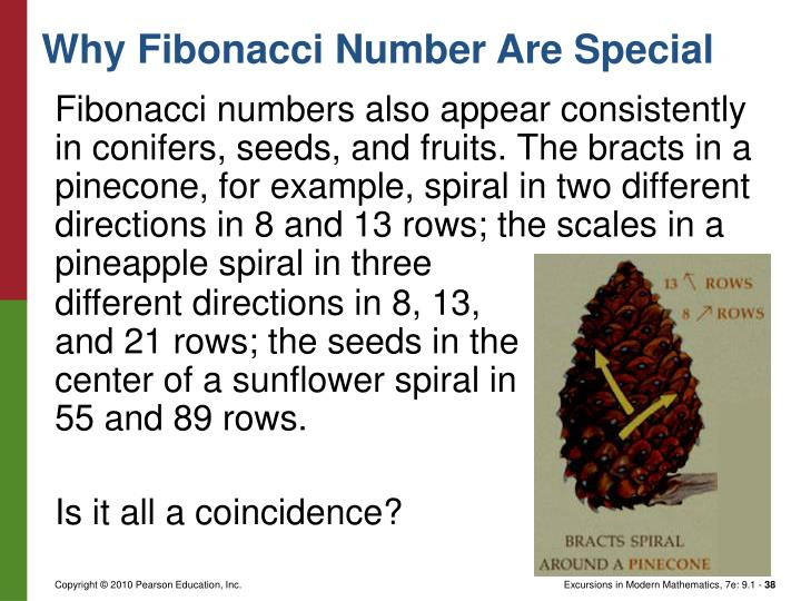 Fibonacci numbers also appear consistently in conifers, seeds, and fruits. The bracts in a pinecone, for