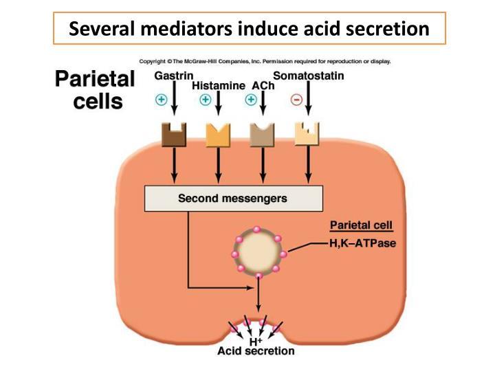 Several mediators induce acid secretion