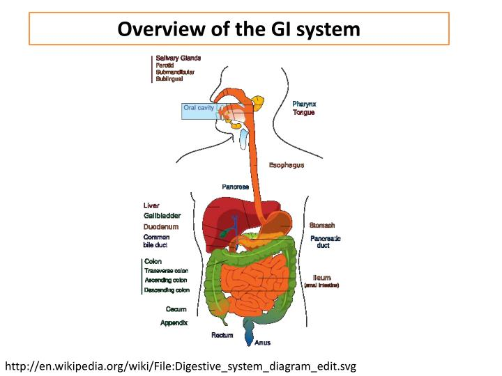 Overview of the GI system