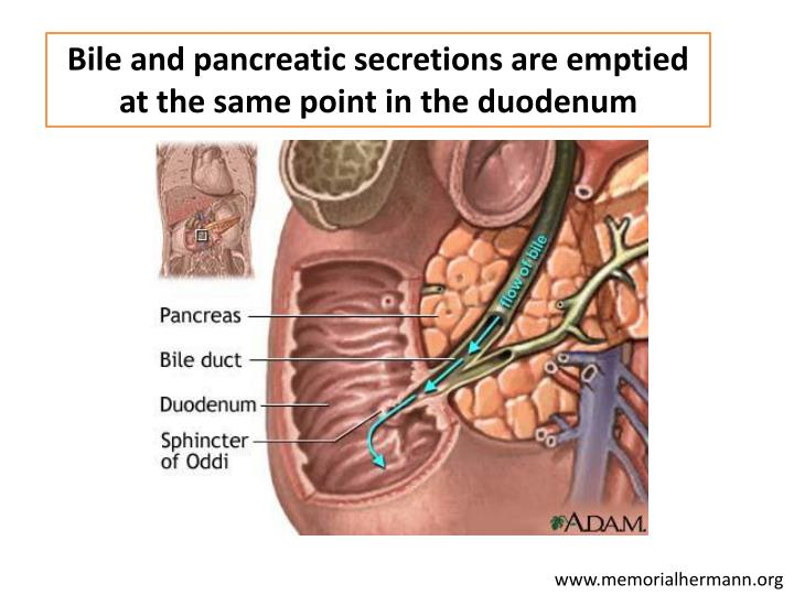 Bile and pancreatic secretions are emptied at the same point in the duodenum