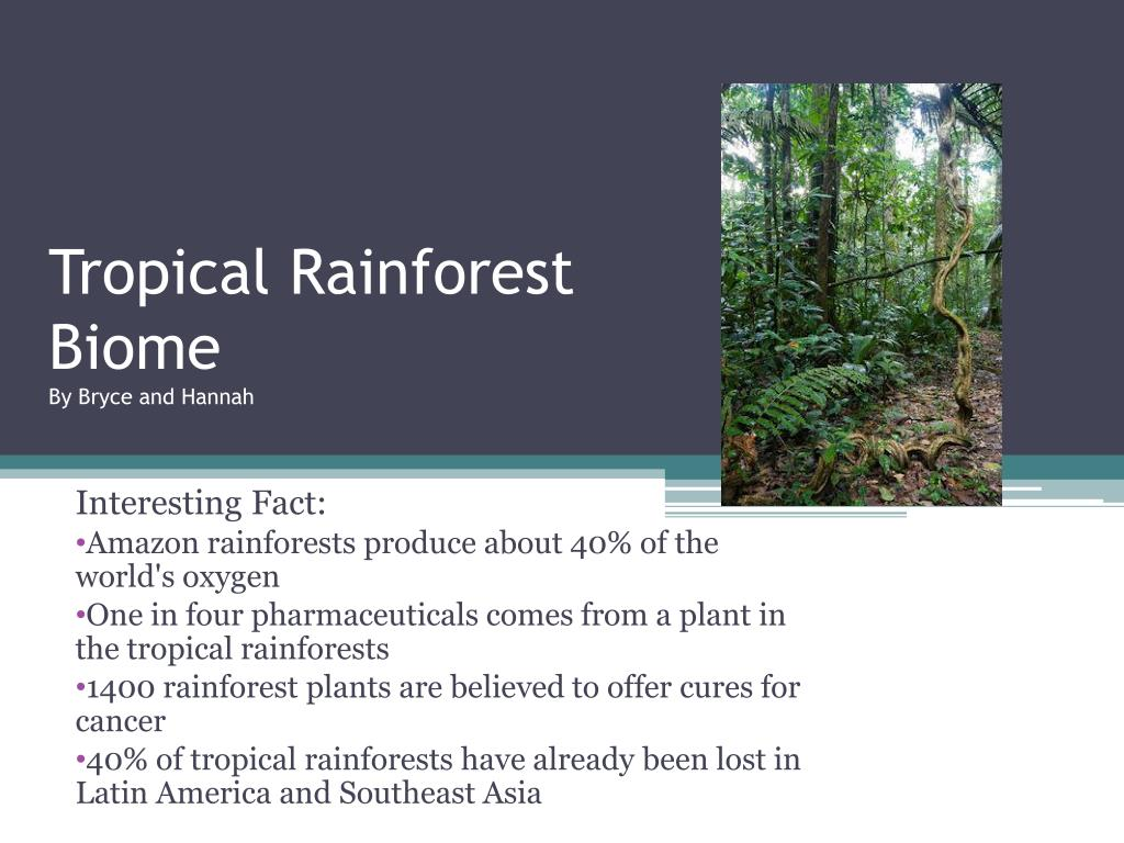 ppt tropical rainforest biome by bryce and hannah powerpoint
