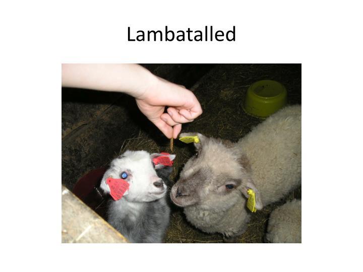 Lambatalled