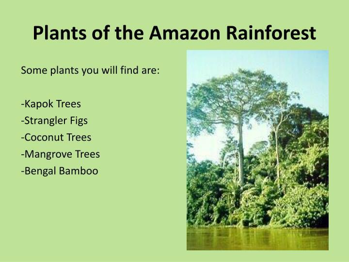 Ppt Rainforests Powerpoint Presentation Id 2429150