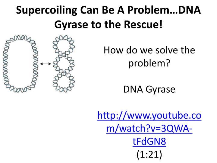 Ppt chapter 7 part 1 the blueprint of life from dna to supercoiling can be a problemdna gyrase to the rescue malvernweather Images