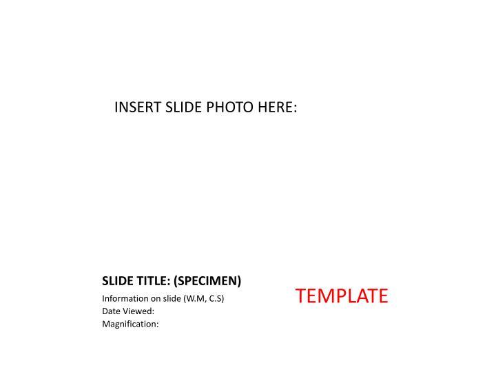 Slide title specimen