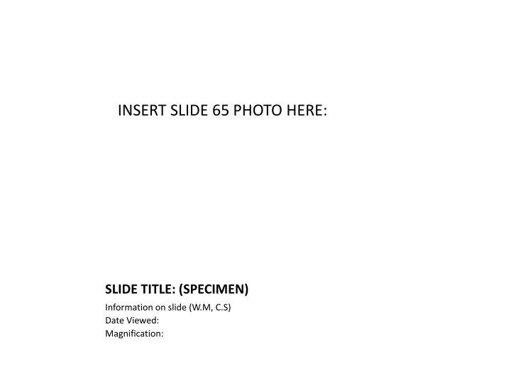 INSERT SLIDE 65 PHOTO HERE: