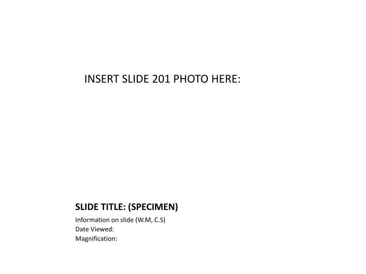 INSERT SLIDE 201 PHOTO HERE: