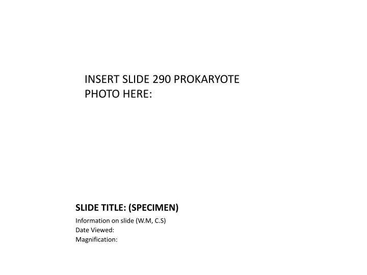 INSERT SLIDE 290 PROKARYOTE