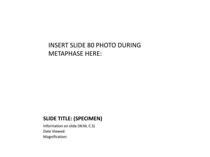 INSERT SLIDE 80 PHOTO DURING