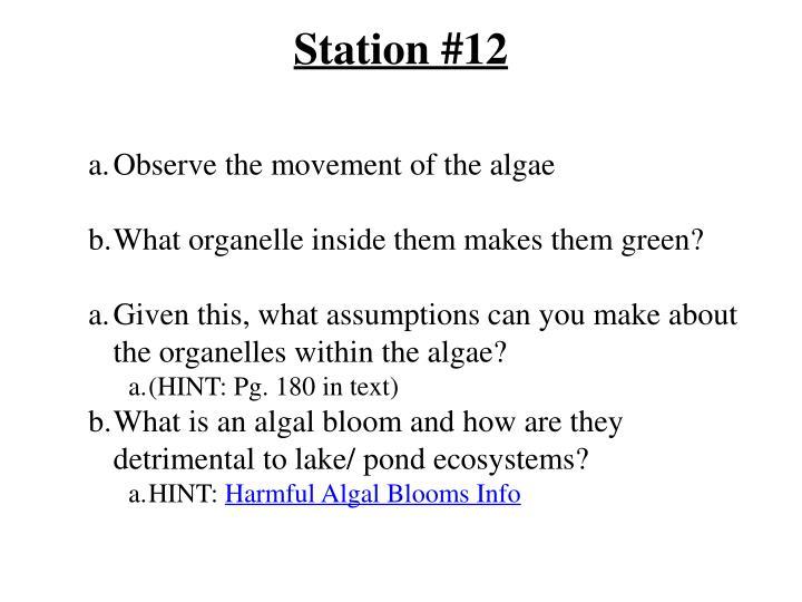 Station #12