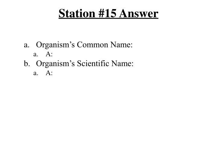 Station #15 Answer