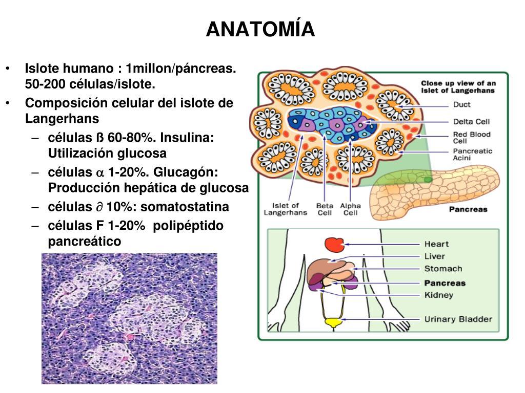 polipéptido pancreático de glicentina y diabetes