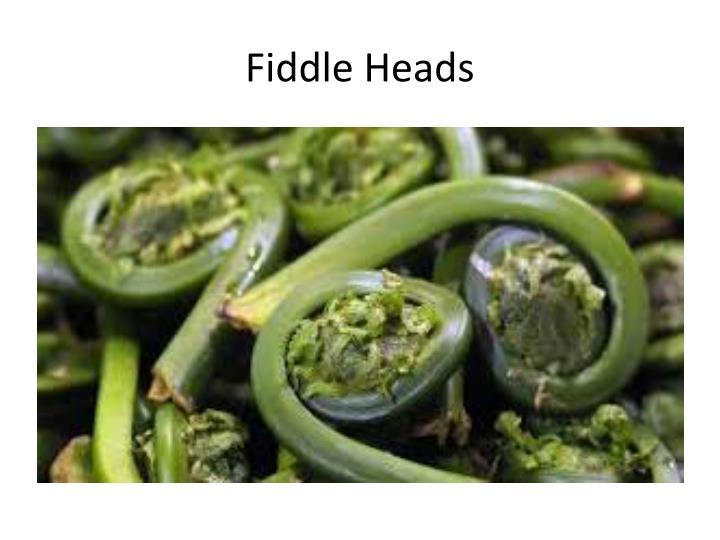 Fiddle Heads
