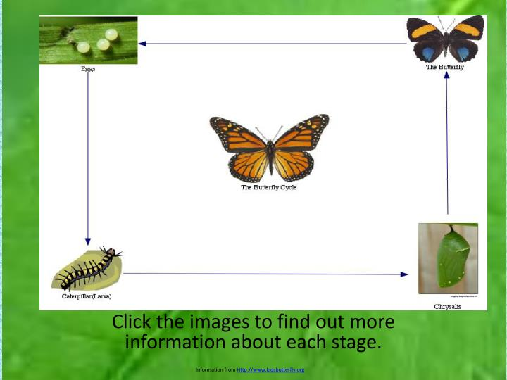click the images to find out more information about each stage n.