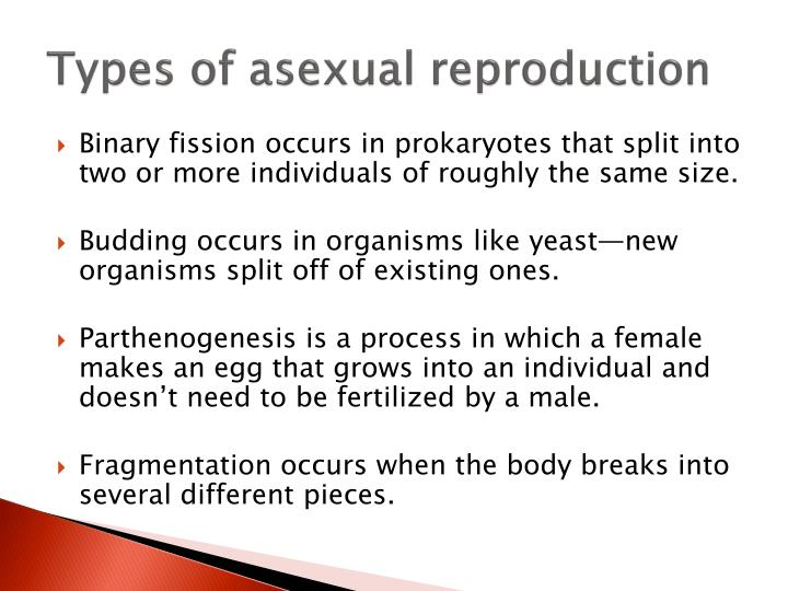 Asexual reproduction occurs during ventricular