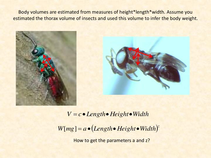 Body volumes are estimated from measures of height*length*width. Assume you estimated the thorax volume of insects and