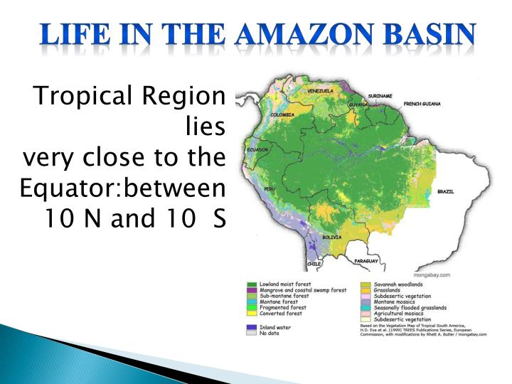 Life in the Amazon Basin