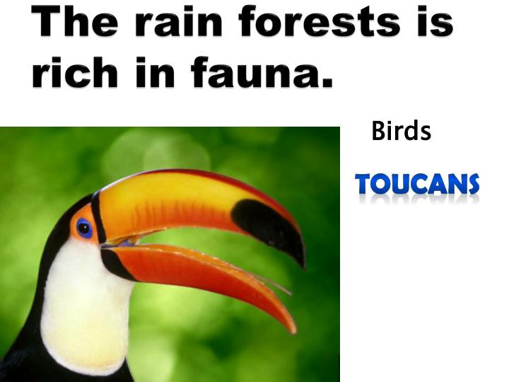 The rain forests is rich in fauna.