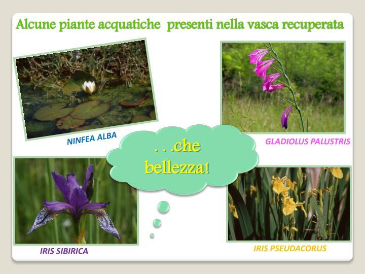 Alcune piante acquatiche  presenti nella vasca recuperata