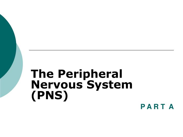 the peripheral nervous system pns n.