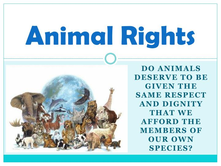 animals deserve rights Animals deserve rights 271 likes this page is about the animals all around the world that deserve to live and have every right that we have.