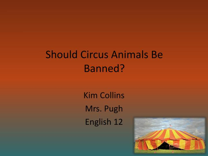 Should circus animals be banned