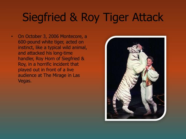 Siegfried & Roy Tiger Attack