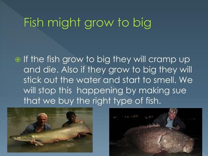 Fish might grow to big