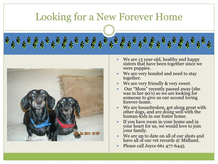 looking for a new forever home n.