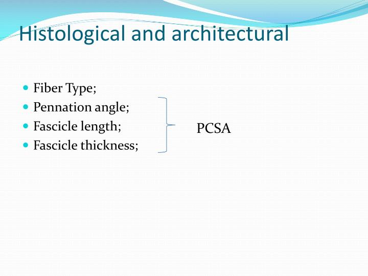 Histological and architectural