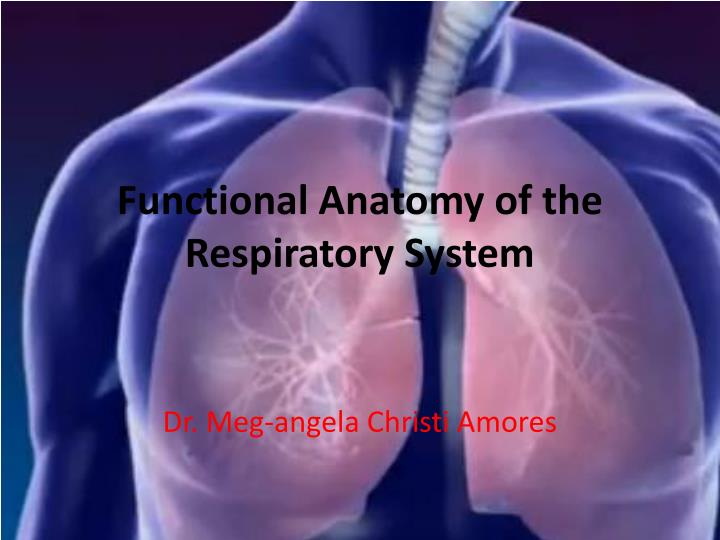 functional anatomy of the respiratory system n.