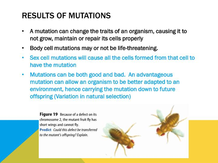 Results of mutations