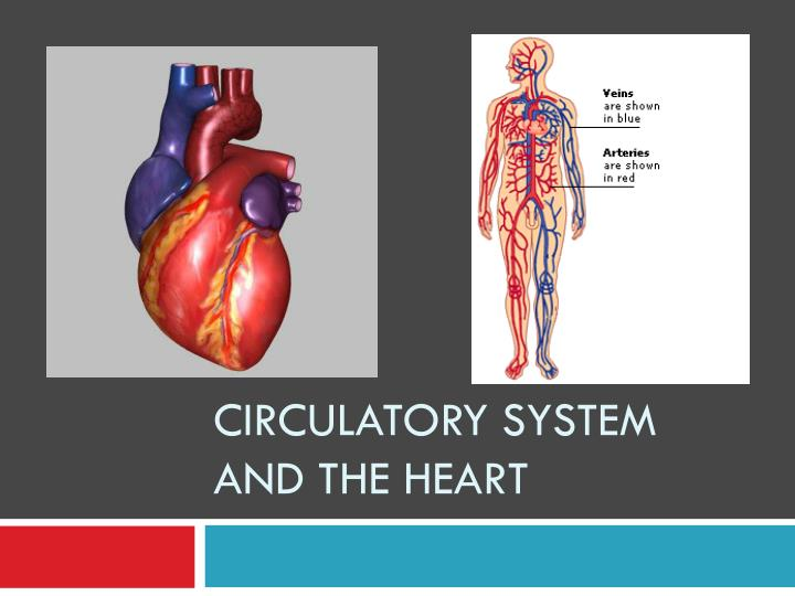 circulatory system and the heart n.