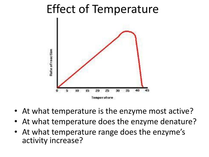 an experiment presenting the effect of temperature changes on enzyme activity The real reason apple cider vinegar works for losing weight - must watch - duration: 12:39 dr eric berg dc 8,832,544 views.