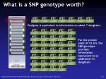 what is a snp genotype worth