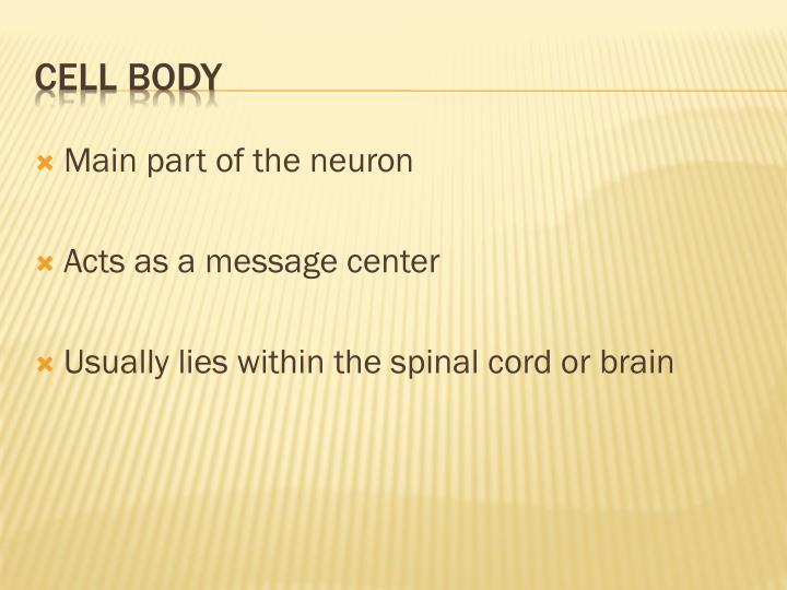 Main part of the neuron