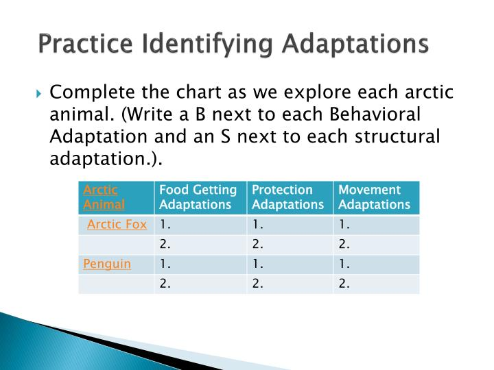 Practice Identifying Adaptations