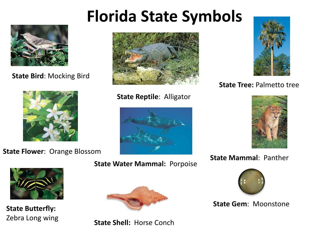 Ppt Florida State Symbols Powerpoint Presentation Free Download Id 2435230