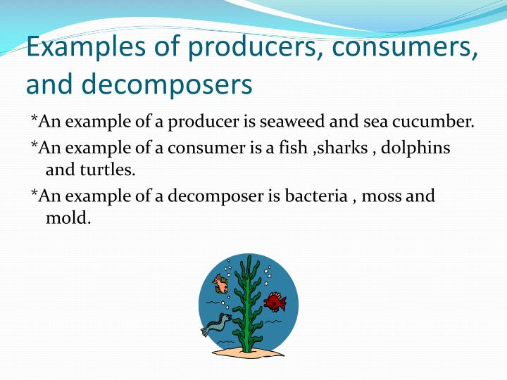 Ppt Coral Reef Powerpoint Presentation Id2435333