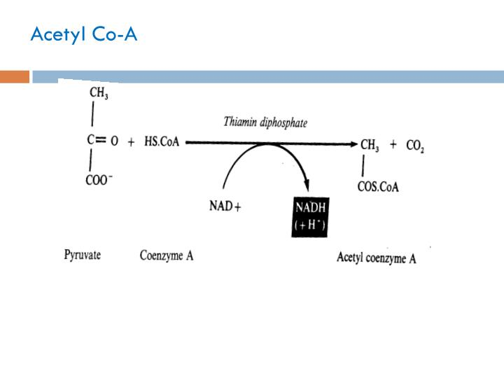 Acetyl Co-A