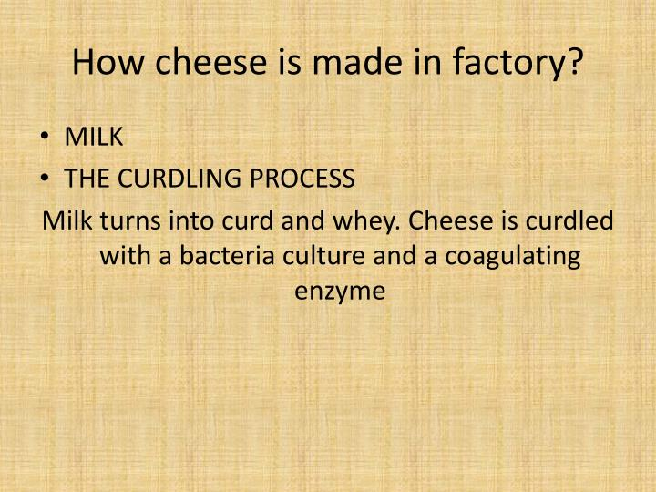 How cheese is made in factory?