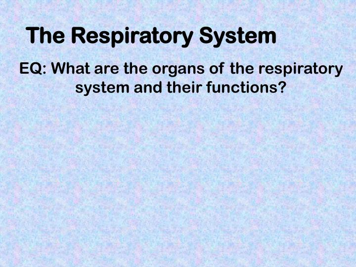 PPT - The Respiratory System PowerPoint Presentation - ID:2437325