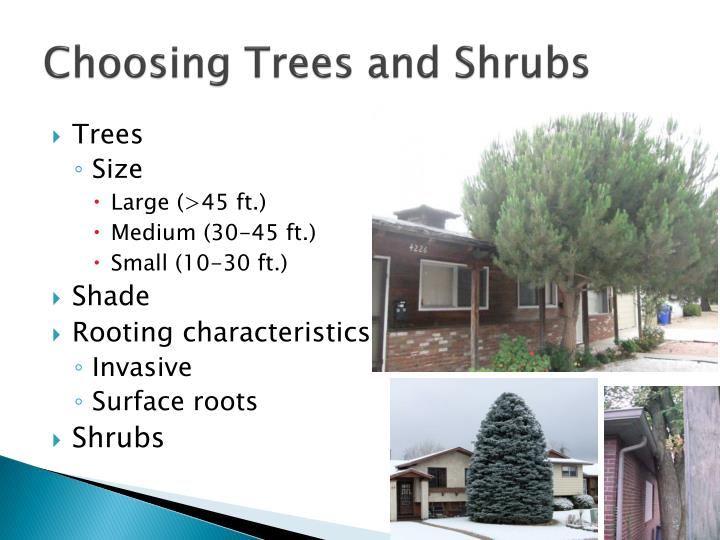 Choosing trees and shrubs