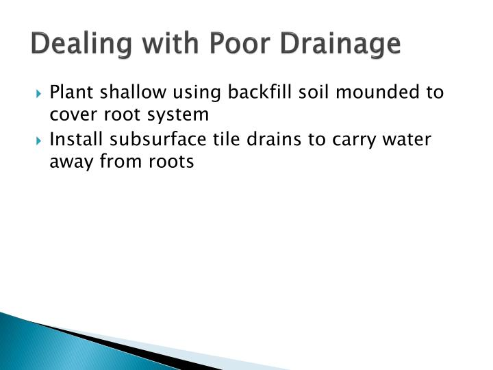 Dealing with Poor Drainage