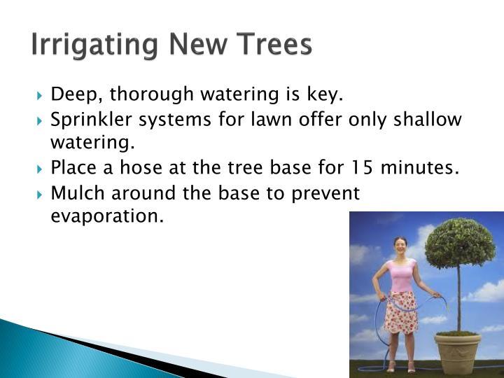 Irrigating New Trees