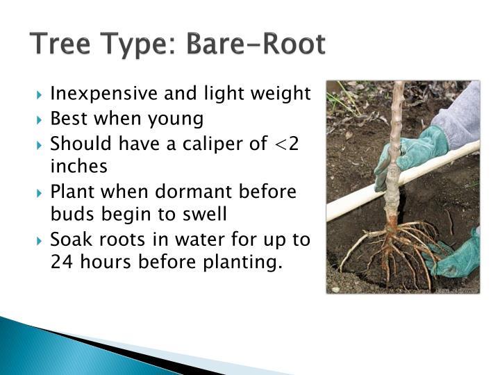 Tree Type: Bare-Root
