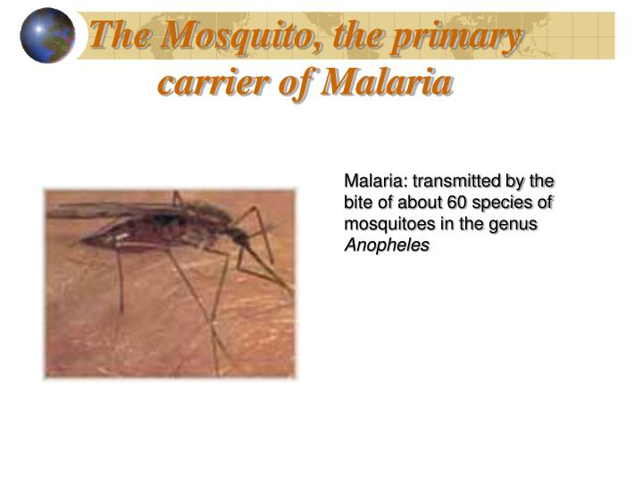 The Mosquito, the primary carrier of Malaria