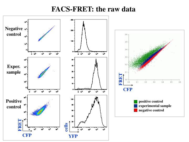 FACS-FRET: the raw data