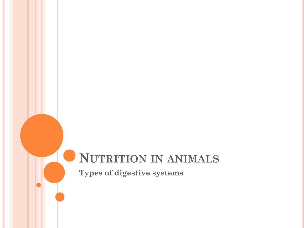Ppt Nutrition In Animals Powerpoint Presentation Id 2439165